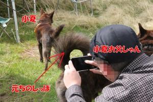 2013_0407_094548 shippo_konatsu_konasuke