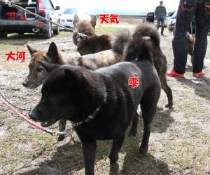 2013_0407_101548 shizuku_taiga_tenki