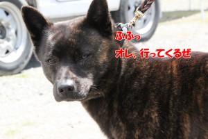 2013_0407_113048 taiga