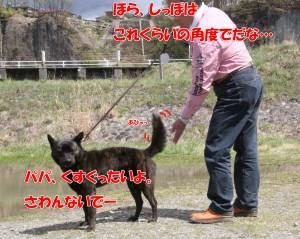 2013_0407_113217 taiga_junbi