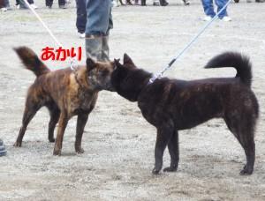 2013_0407_130635 akari_aisatsu
