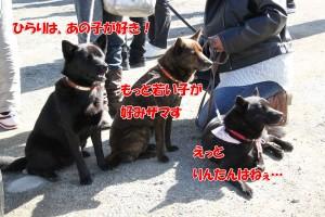2013_0407_150723(1) shinasadame