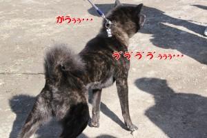 2013_0407_151853 kuma_oikari