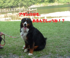 2013_0831_150945