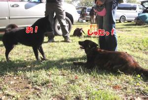 2013_1013_082752 riku_mego03