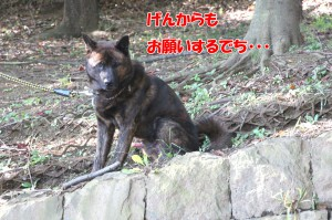 2013_1013_084648 onegai