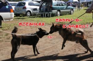 2013_1013_093315 mego_kai