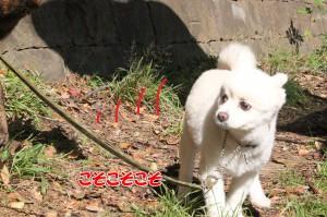 2013_1013_093515 oryu_taiga02