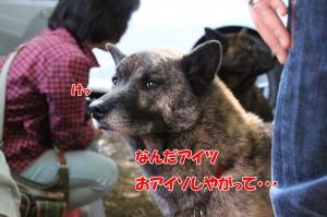 2013_1013_094647 kotetsu01