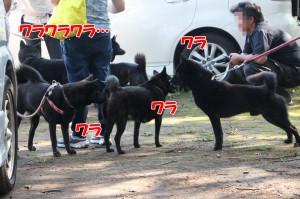 2013_1013_101611 warawara