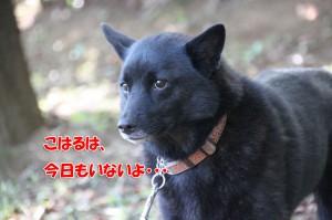 2013_1013_102114 koharu