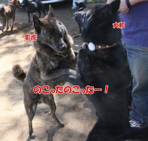 2013_1013_111423 yamato_kage