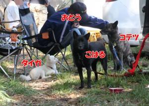 2013_1013_120219 oukoku
