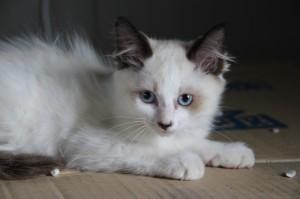 013_20140712 洋猫っぽい男の子9